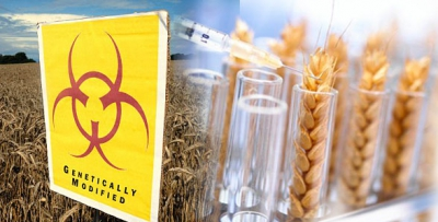 http://rinf.com/alt-news/editorials/monsanto-menu-science-power-gmos/